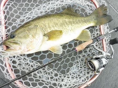 この春をフリックシェイクで釣り続けた理由