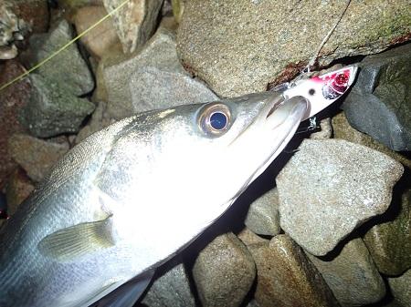 淡路島で多魚種攻略‼