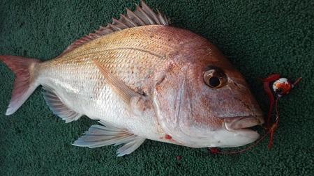 香川 鯛ラバ
