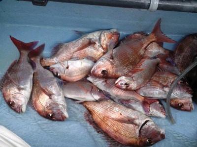 連日大ダイが釣れ、この日も大盛況‼