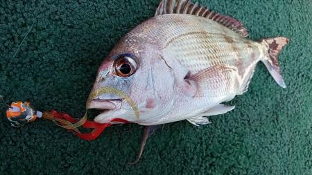 Wアピールチューンで香川鯛ラバ