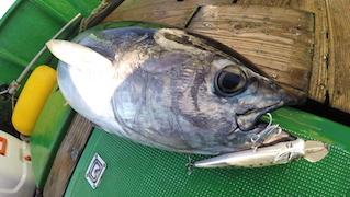大型魚対応 最大サイズ ″ライザーベイト015P″ 実釣PV公開