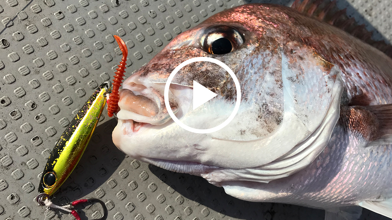 【鯛ジギング】タダ巻きで誰でも簡単!メタルジグで鯛を釣る!/ ビンビンメタルTG