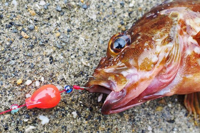 多彩な魚種に対応する小型フック