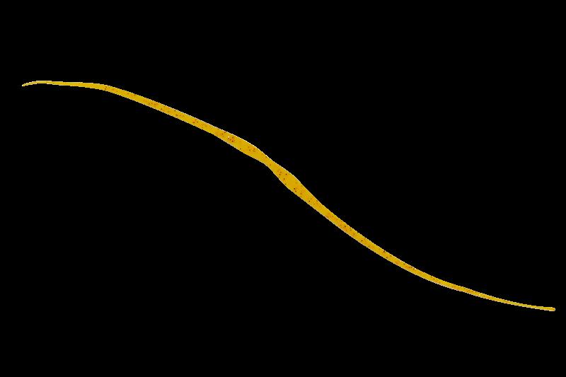 エビオレンジ