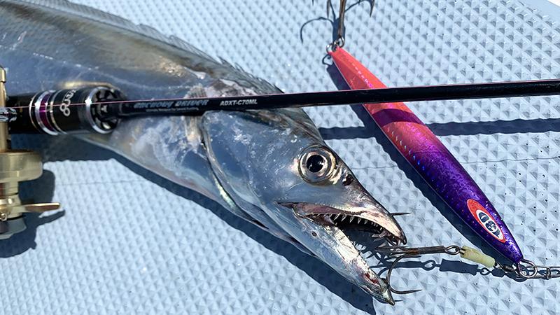 シーズン先取り、東京湾タチウオ探検釣行へ