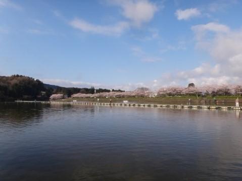 ちびパニクラと春の東山湖