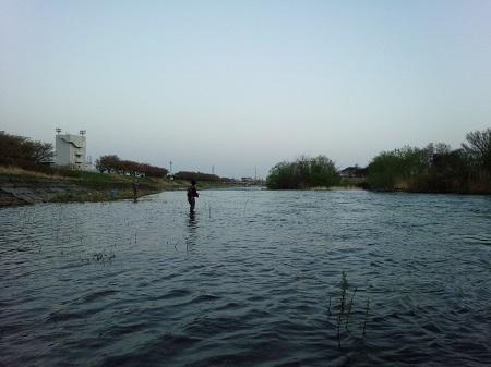 今期2匹目の櫻鱒